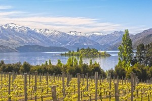 New-Zealand-winery4